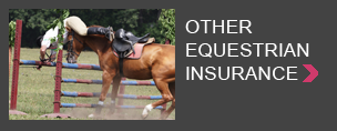 Other horse insurance